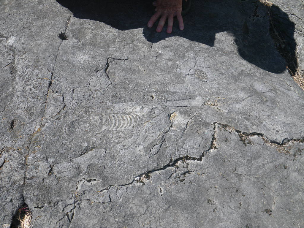 fish fossil and fissure